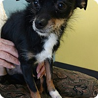 Adopt A Pet :: Ellie - North Las Vegas, NV