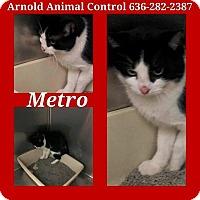 Adopt A Pet :: Metro - Fenton, MO