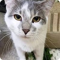 Adopt A Pet :: Dante - Lapeer, MI