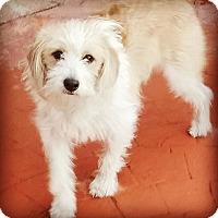 Adopt A Pet :: Wally - Monrovia, CA