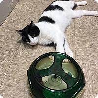 Adopt A Pet :: Corey - Colmar, PA