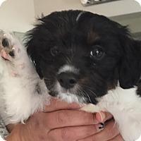 Adopt A Pet :: Sundae (V) - Santa Ana, CA