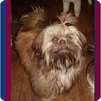 Adopt A Pet :: Filbert - Berlin, WI