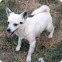 Adopt A Pet :: Bandit - Westfield, IN
