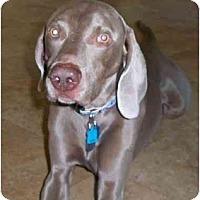 Adopt A Pet :: Malachi **ADOPTED** - Eustis, FL