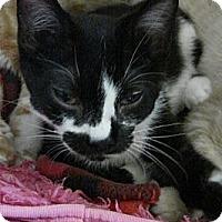 Adopt A Pet :: Donatello - Grand Rapids, MI