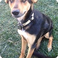 Adopt A Pet :: Gunner - Tustin, CA