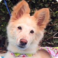 Adopt A Pet :: LASSIE - Irvine, CA