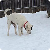 Adopt A Pet :: Spot *NEW LOW ADOPTION FEE! - Zanesville, OH