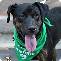 Adopt A Pet :: Cora - Alpharetta, GA