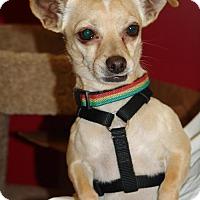 Adopt A Pet :: HARLEY DAVIDSON - Phoenix, AZ
