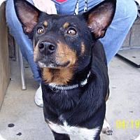 Adopt A Pet :: Founder - Grand Prairie, TX