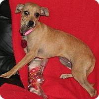 Adopt A Pet :: Princess - Umatilla, FL