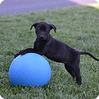 Adopt A Pet :: Breeze - New Oxford, PA