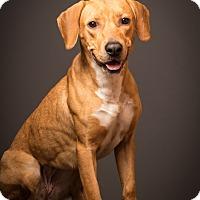 Adopt A Pet :: Dayton -professionally trained - Woonsocket, RI