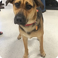 Adopt A Pet :: sister in CT - Manchester, CT