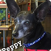 Adopt A Pet :: Peppy - Phoenix, AZ