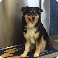 Adopt A Pet :: Rosco - St. Louis, MO