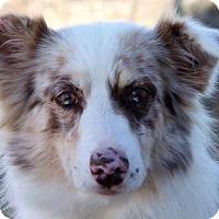 Adopt A Pet :: Dacey - Colorado Springs, CO