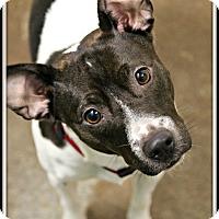 Adopt A Pet :: Titan - Dunkirk, NY