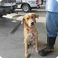Adopt A Pet :: A571010 - Oroville, CA