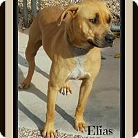 Adopt A Pet :: Elias - Tombstone, AZ