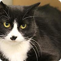 Adopt A Pet :: Hillary - Greensboro, NC