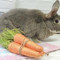 Adopt A Pet :: Willie - Williston, FL