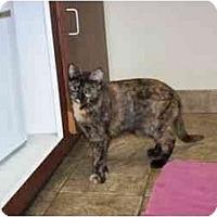 Adopt A Pet :: Rizzo - Secaucus, NJ