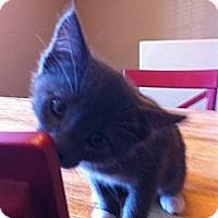 Adopt A Pet :: FLINT - Phoenix, AZ