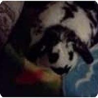 Adopt A Pet :: Olive - Maple Shade, NJ