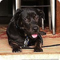 Adopt A Pet :: Trent - Santa Monica, CA