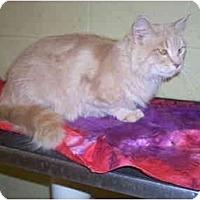 Adopt A Pet :: Loki - Bartlett, TN