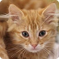 Adopt A Pet :: Fuzzy Wuzzy - Sacramento, CA