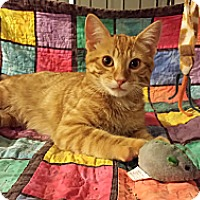 Adopt A Pet :: Pickles - Edmond, OK