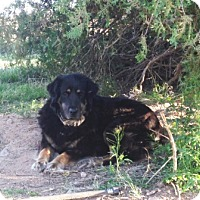 Adopt A Pet :: Daisy / Courtesy Posting - Tucson, AZ