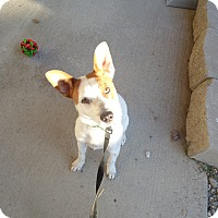 Adopt A Pet :: Jojen - Chewelah, WA