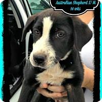 Adopt A Pet :: Luke in CT - East Hartford, CT