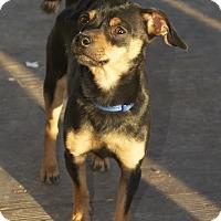 Adopt A Pet :: Zuzu - Winters, CA