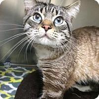 Adopt A Pet :: Stimpy - Bradenton, FL