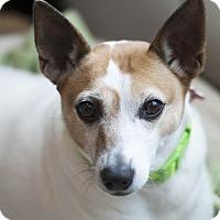Adopt A Pet :: JimmyDean - San Diego, CA