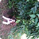 Adopt A Pet :: Daffney