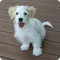 Adopt A Pet :: Seth - Richmond, VA