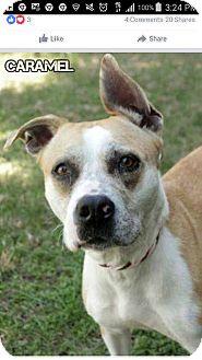 Terrier (Unknown Type, Medium) Mix Dog for adoption in Williamsburg, Virginia - Caramel