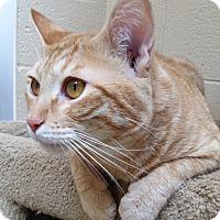 Adopt A Pet :: Ben - Chula Vista, CA