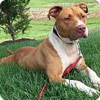 Adopt A Pet :: Sandra D - Voorhees, NJ