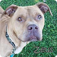 Adopt A Pet :: Zeus - Tremont, IL