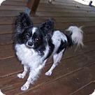 Adopt A Pet :: Hadassah (in Ohio)