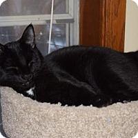 Adopt A Pet :: Yahoo - Maple Grove, MN