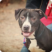 Adopt A Pet :: Jack Skellington - Brookhaven, NY